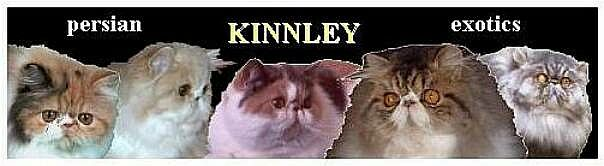 cattery Kinnley